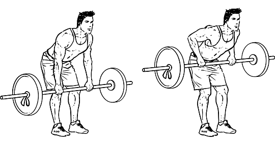 bent_over_barbell_row_m_workoutlabs.png